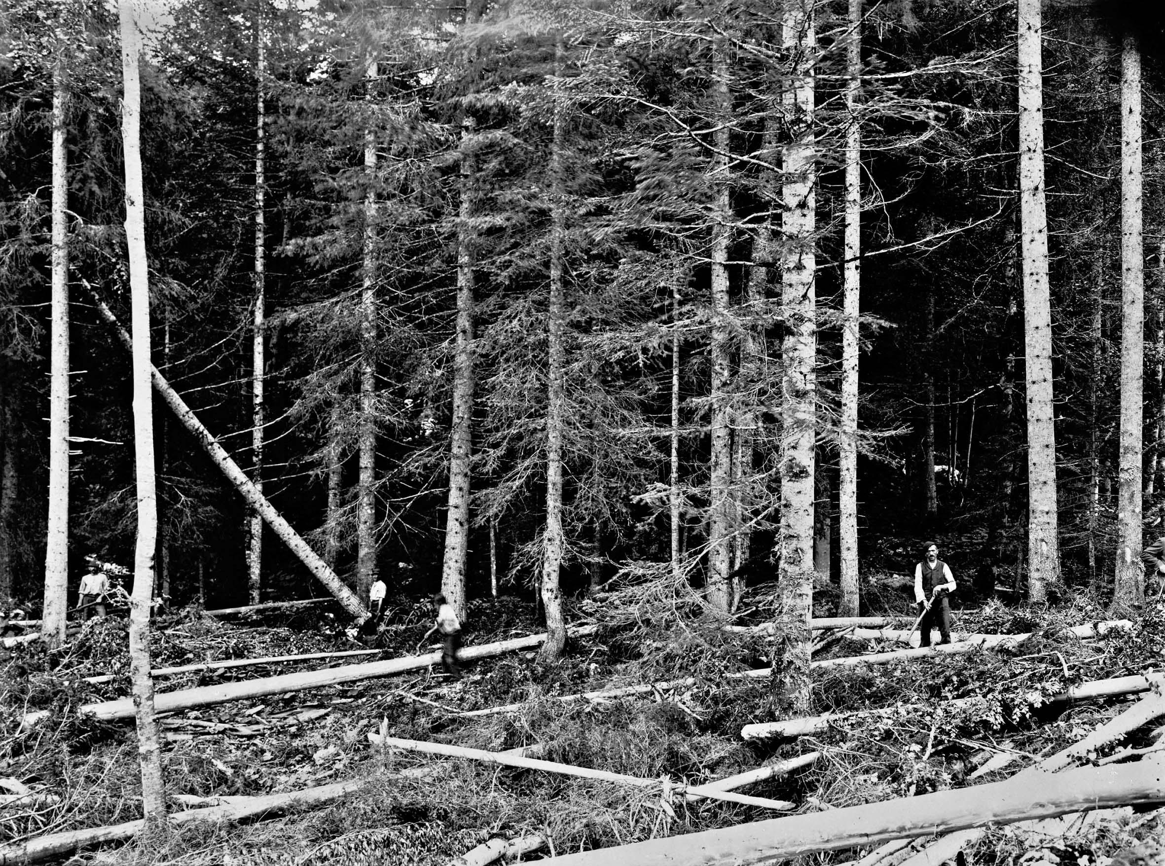 Equipe de bûcherons en forêt © Maison Bergès